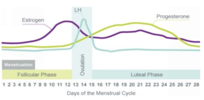 Using The Menstrual Cycle to Optimize fitness, body